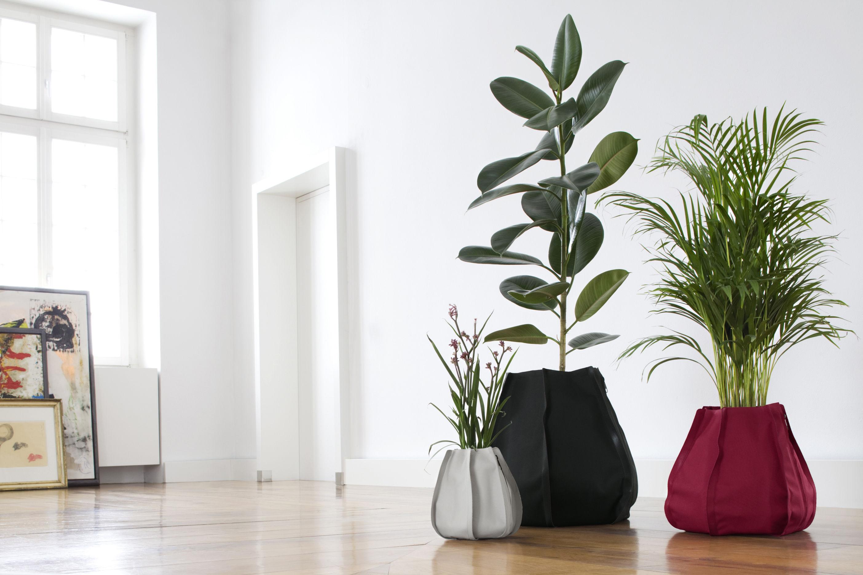 Vasi Per Piante Da Appartamento.Inquinamento In Ufficio Ecco Le Piante Che Purificano L Aria