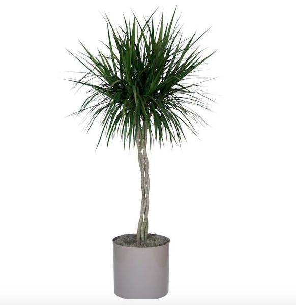 Inquinamento domestico 15 piante da appartamento che depurano l 39 aria della casa xoffice blog - Piante che purificano l aria in casa ...
